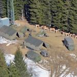 Haflinger Tragtiere