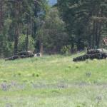 Nun beginnen auch die Schützenpanzer Ulan ihren Vorstoß auf Kühbach © Doppeladler.com