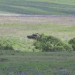 Nach heftigen Infanteriekampf taucht der erste Ulan hinter Kühbach auf - Monet hätte in seinen Gemälden die Stimmung nicht besser einfangen können. © Doppeladler.com