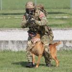 """Hund und Hundeführer sind eine Einheit - der Hund geht beidseitig und zwischen den Beinen """"Fuß"""""""