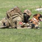 Beginnt der Hundeführer zu robben, macht es auch der Hund