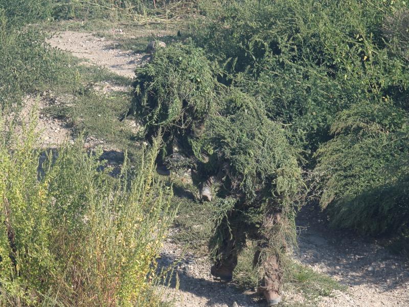 Doch nun verschwinden die Schützen im Buschwerk und nehmen die Angreifer unter Beschuss