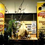 Für kurze Zeit ist der Strauch in der Auslage des Vereinslokals Ecke Prager Straße 15 / Frömmlgasse 37 in 1210 Wien zu sehen © Doppeladler.com